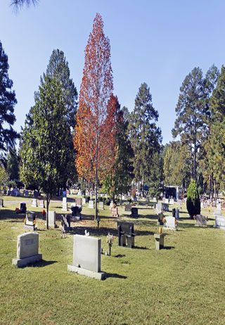 Cemetery grounds at Forest Hills Cemetery