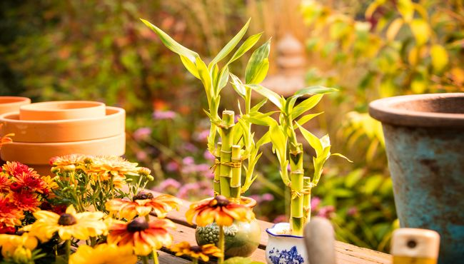 Gardening supplies sit on an outdoor wooden table