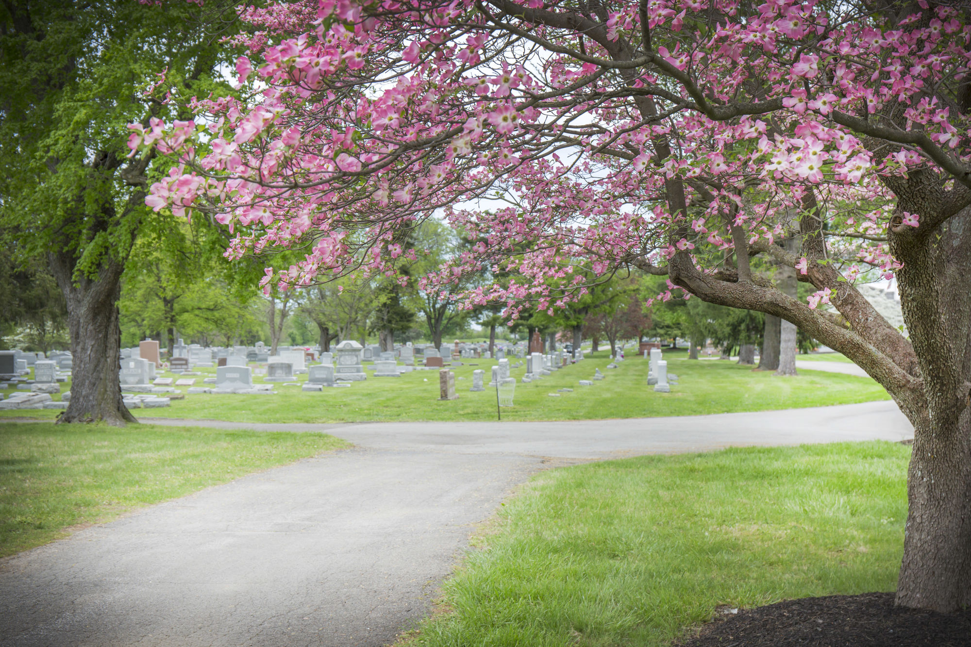 Cemetery grounds at Evergreen Cemetery