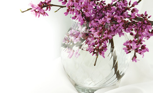 Purple flowers in glass vase, representing the Compassion Helpline